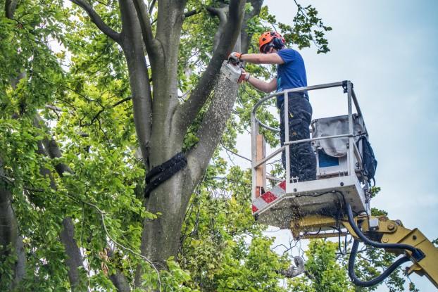 Baumrckschnitt mit Hubsteiger - Kollegen beobachten den Holzfller