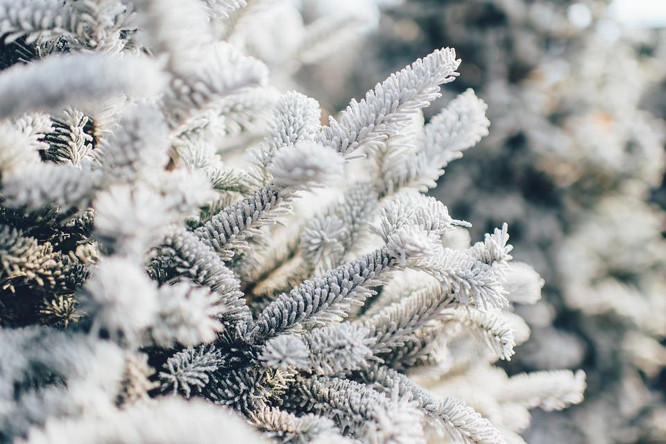 frosty-1081851_960_720