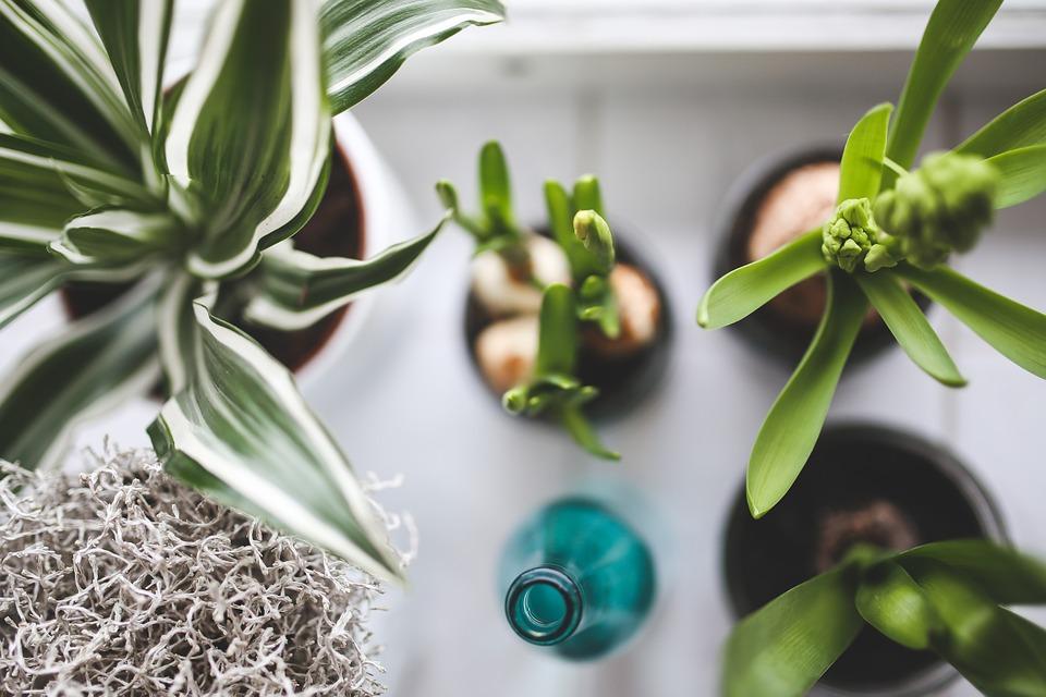 Nettoyage - Plantes dépolluantes