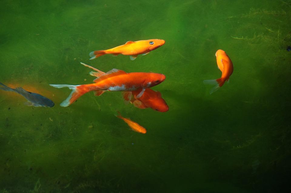 Cr ation d un bassin creus dans votre jardin l 39 atelier for Bassin de jardin pour poisson