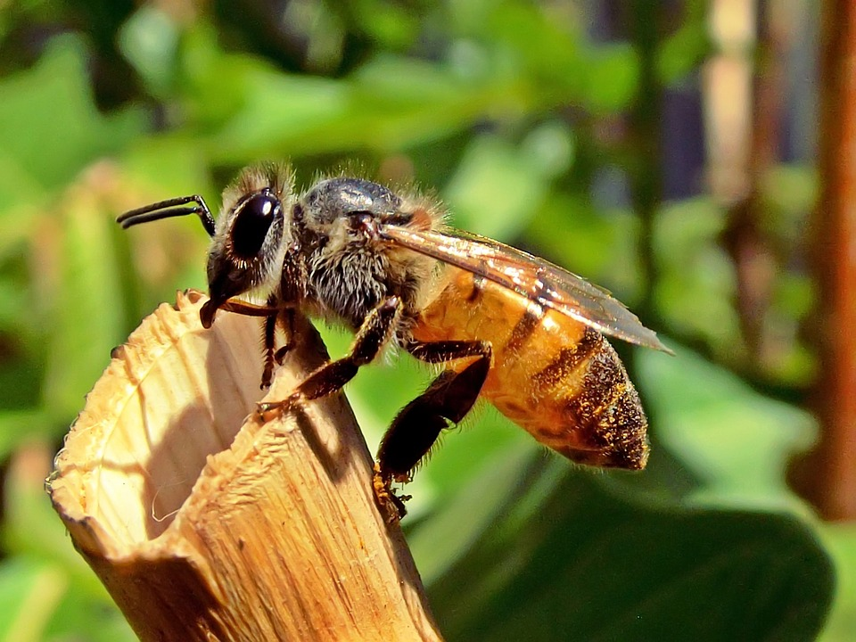 abeille entretien jardin