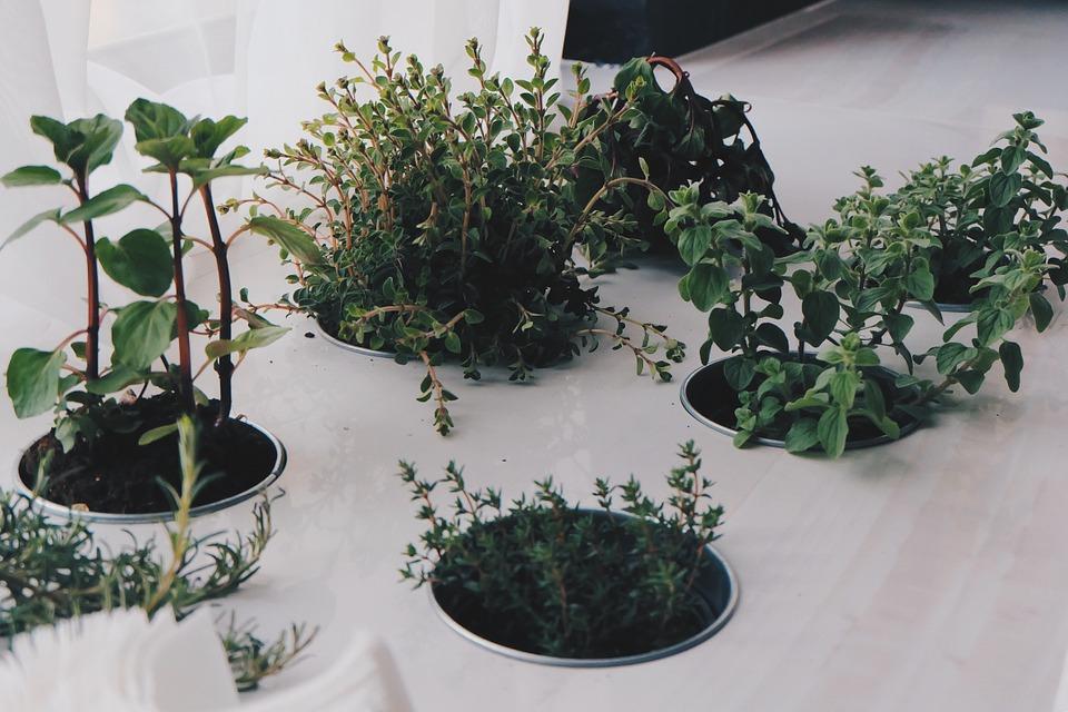 plantes aromatiques en intérieur - atelier de l'habitat