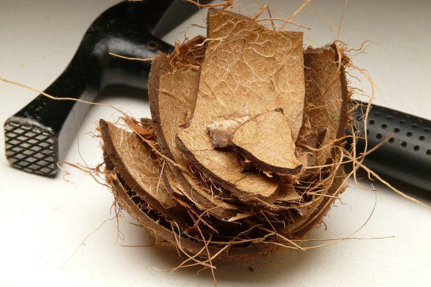 coconut-60447_1920