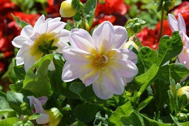 flowers-2473051_1920