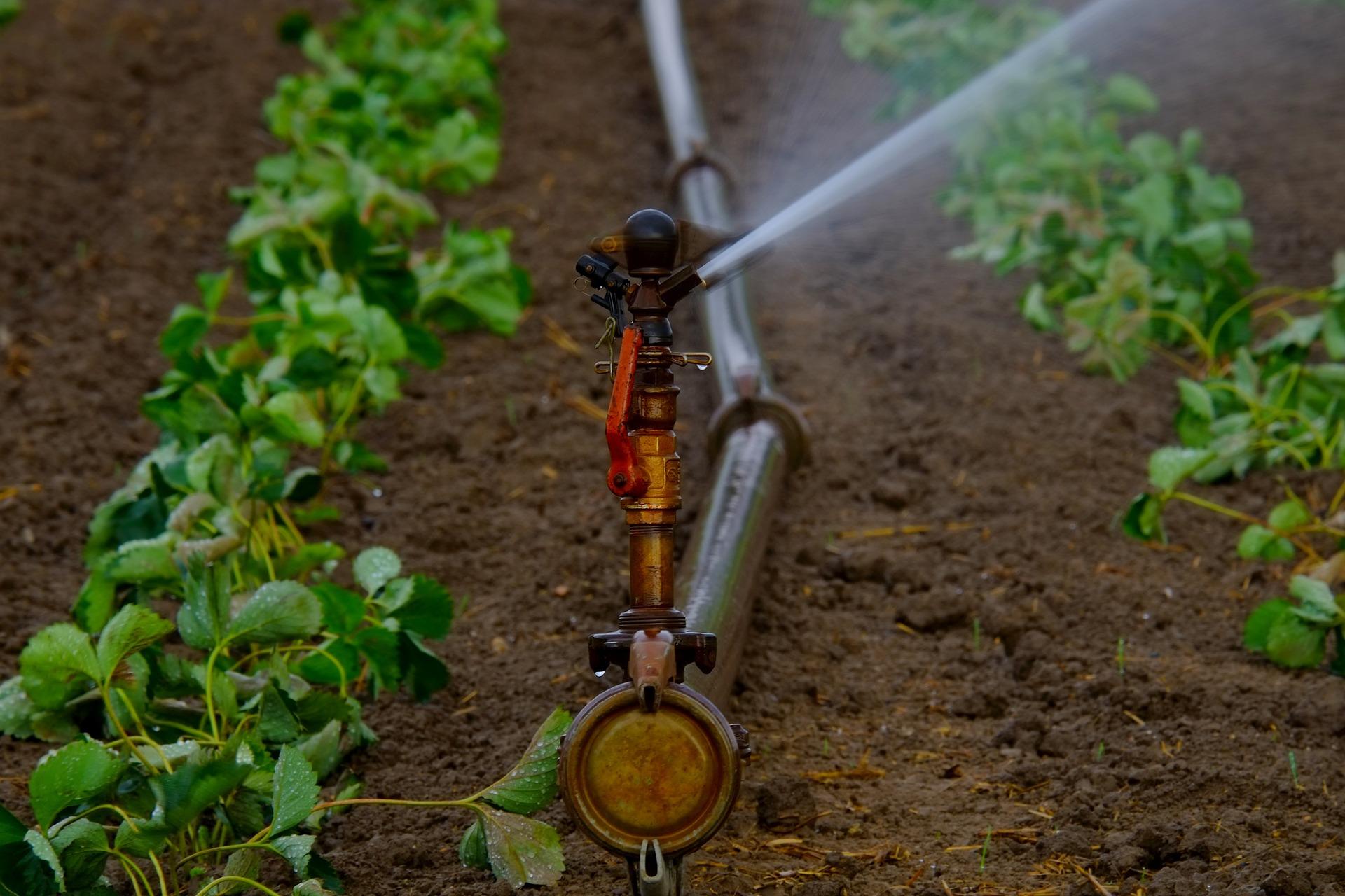 water-sprinklers-880970_1920