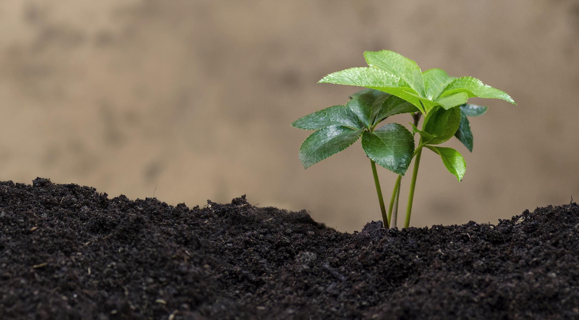 green-plant-2352478_1920