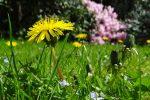 meadow-43467_1920