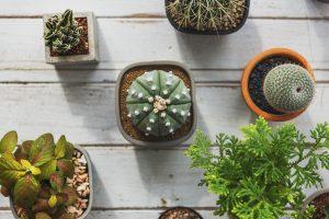 Plantes pour terrarrium intérieur Atelier de l'habitat