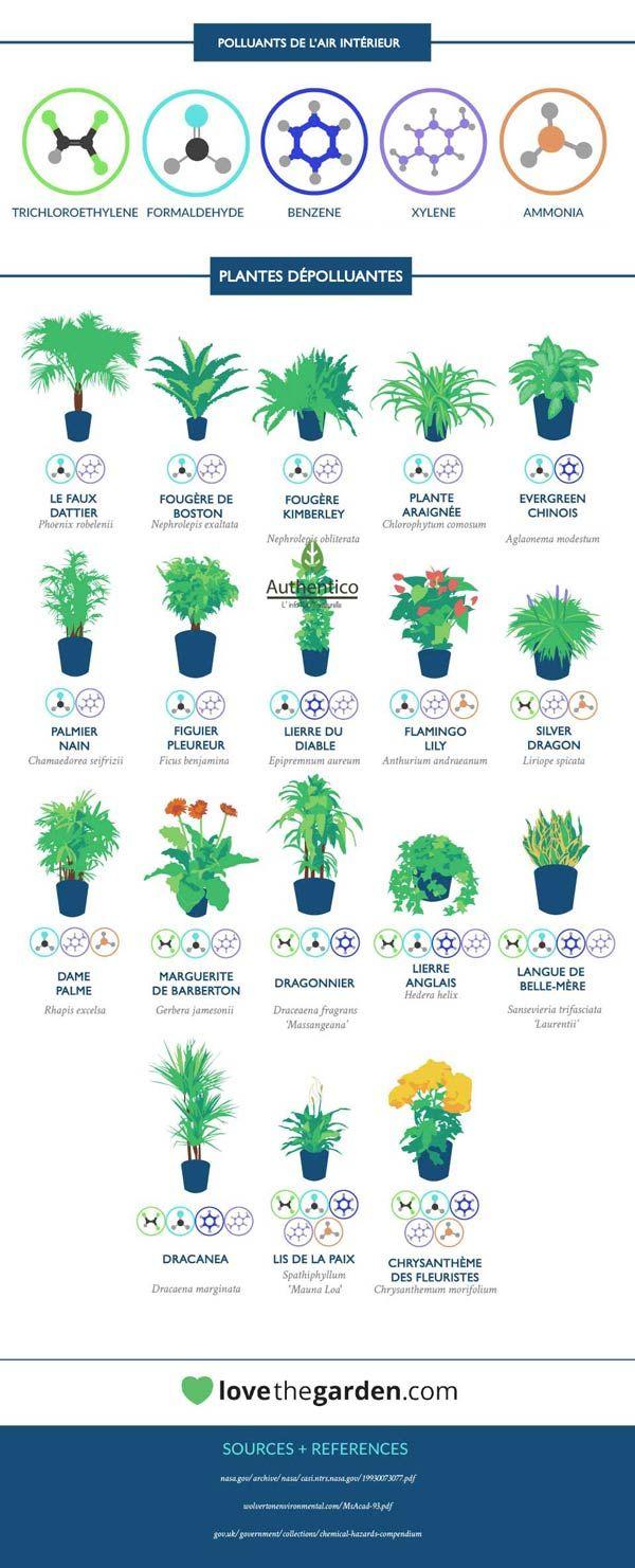 Liste des plantes d'intérieur dépolluantes
