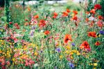 Flowers ADH